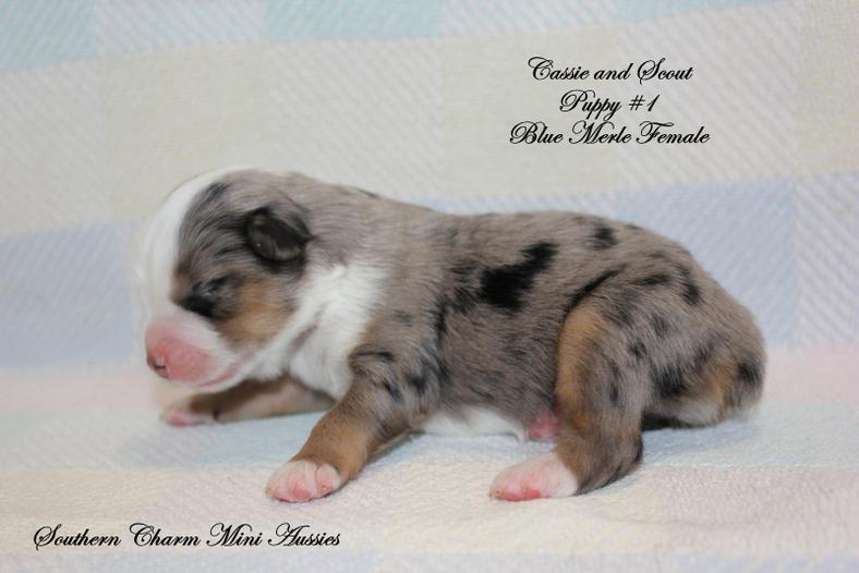 New-Puppies-